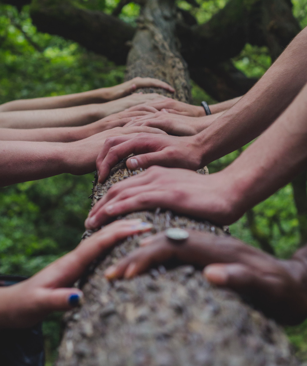 People with their Hands on a Tree